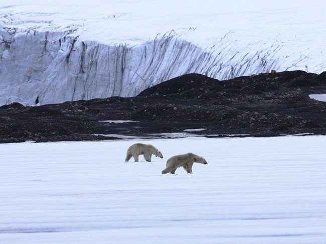 Safari à la voile sur les terres de l'ours polaire