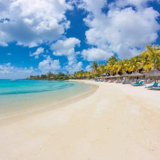 Royal Palm - Ile Maurice