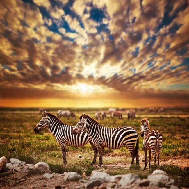 Tanzanie du Nord- Safari privé de 9 jours et 7 nuits