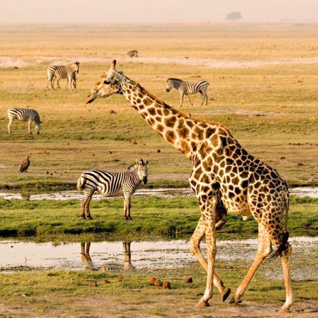 Road trip en Afrique australe - Namibie Botswana Zimbabwe