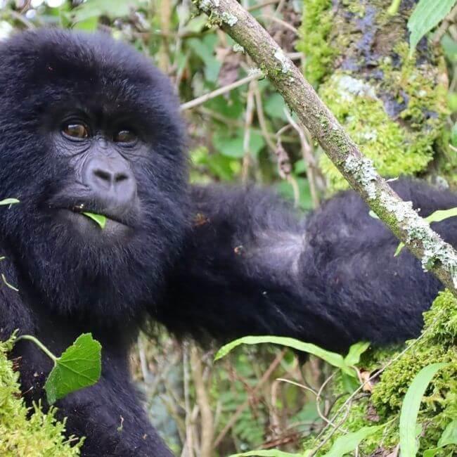 Circuit - Rwanda